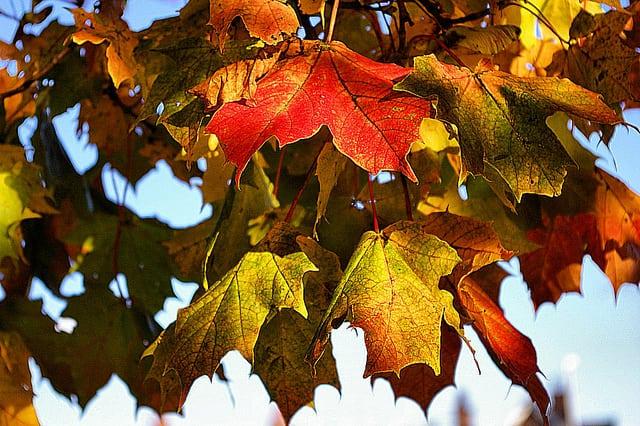 Fabulous autumn foliage in Scotland. Pic credit: Gordon Robertson Flickr