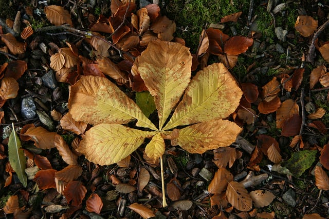 Autumn leaf. Pic credit Pete on Flickr