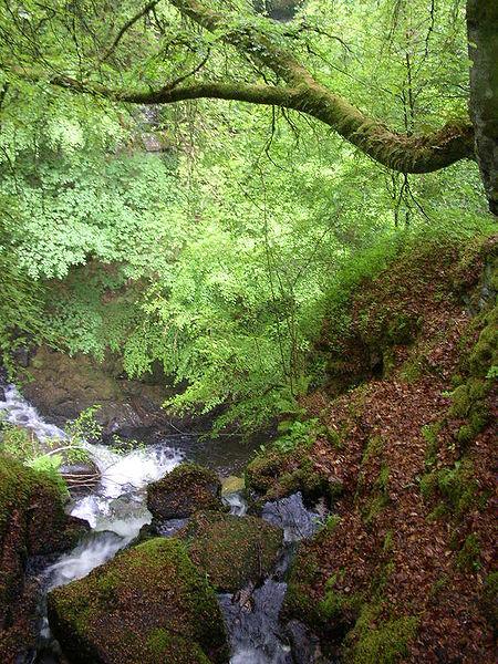 Take a walk through the Birks of Aberfeldy.  Dave Morris